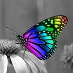 DP® Diamond Painting Colorfull Butterfly